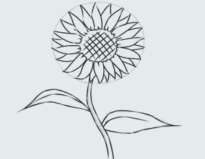 cách vẽ bông hoa