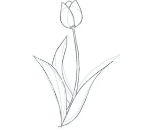cách vẽ bông hoa  HƯỚNG DẪN CÁCH VẼ BÔNG HOA ĐƠN GIẢN CHO BÉ TL3 300x263