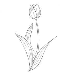 cách vẽ bông hoa  HƯỚNG DẪN CÁCH VẼ BÔNG HOA ĐƠN GIẢN CHO BÉ TL4 300x279