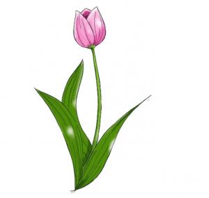 cách vẽ bông hoa  HƯỚNG DẪN CÁCH VẼ BÔNG HOA ĐƠN GIẢN CHO BÉ TL5 300x285