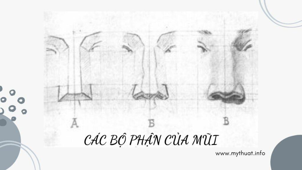 Các bộ phận của mũi