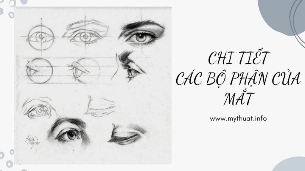 Chi tiết các bộ phận của mắt