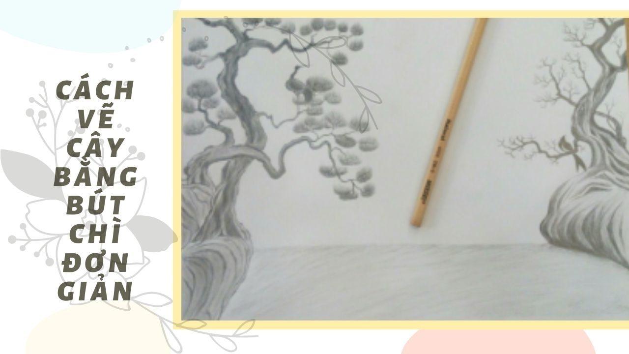 Cách vẽ cây bàng bút chì đơn giản