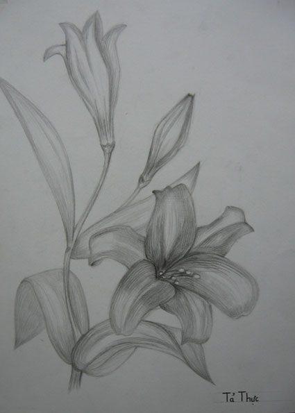 Vẽ cách điệu hoa Ly  CÁCH ĐIỆU HOA LÁ (phần 2) ve cach dieu hoa lily 1
